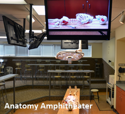 Anatomy at Logan College of Chiropractic/University Programs